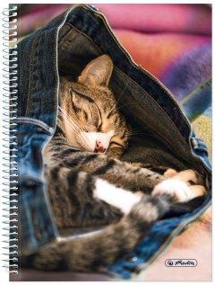 Блокнот Herlitz А5 120 листов в точку Jeans Cat Котик (50030996C)