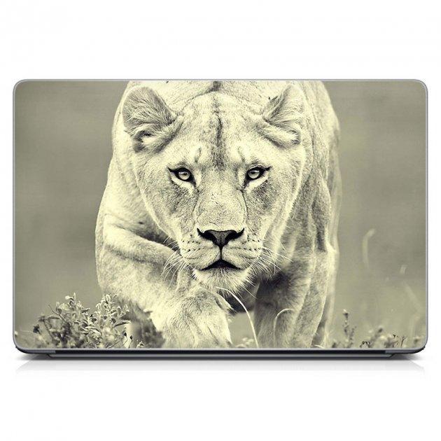 """Универсальная наклейка на ноутбук 15.6""""-13.3"""" IdeaClock 380х250 мм lioness Матовая - изображение 1"""