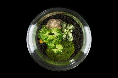Декоративний флораріум в банку з живими рослинами MossGarden Ф6