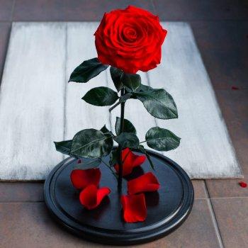 Стабилизированная роза в колбе Lerosh - De Lux 43 см, Красный
