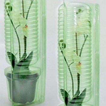 Орхідея Howera Red Florium
