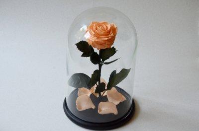 Стабилизированная роза в колбе Etoile Flora Персиковый сад 33 см (33R-0810)