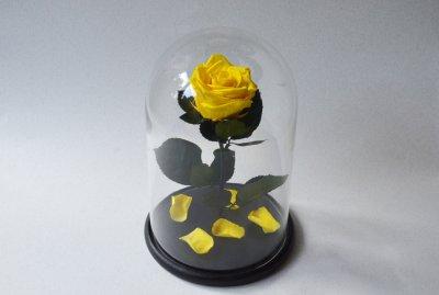 Стабилизированная роза в колбе Etoile Flora Бархатный желтый 33 см (33R-0807)