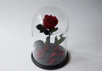 Стабилизированная роза в колбе Etoile Flora Бордовый кармен 33 см (33R-0807)
