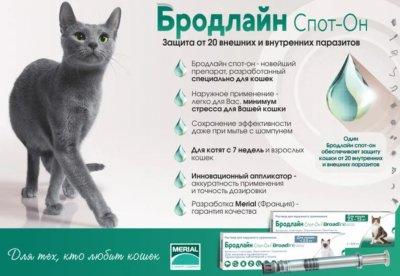 Краплі Merial Бродлайн від бліх і кліщів для кішок вагою 2.5-7.5 кг (L) 3 шт. (3661103043614/2000981075385/3661103051985)