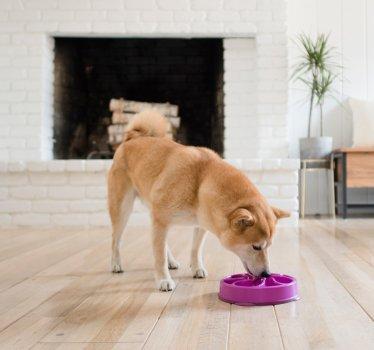 Миска-лабіринт для собак Outward Hound Фан Фідер Квітка Середня Фіолетова (oh51005)