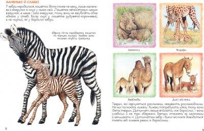Мами і малюки. Дивовижний світ тварин - Ренне (9789669850591)