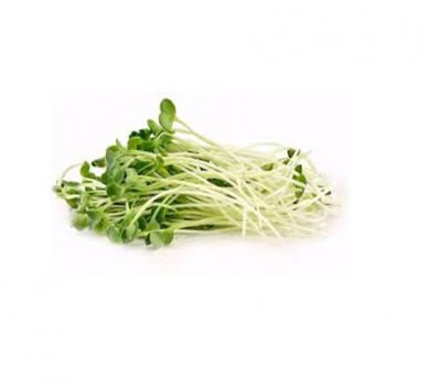Мікрозелень Скайсмарт «Редис» (звичайний) 50 г