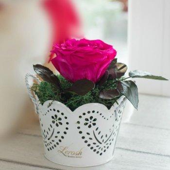 Композиция Стабилизированные розы и растения Кашпо ажур с ручками Lerosh