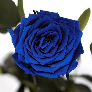 Долгосвежая жива троянда Florich в подарунковій упаковці - СИНІЙ САПФІР 5 карат на короткому стеблі (1115-BL03)